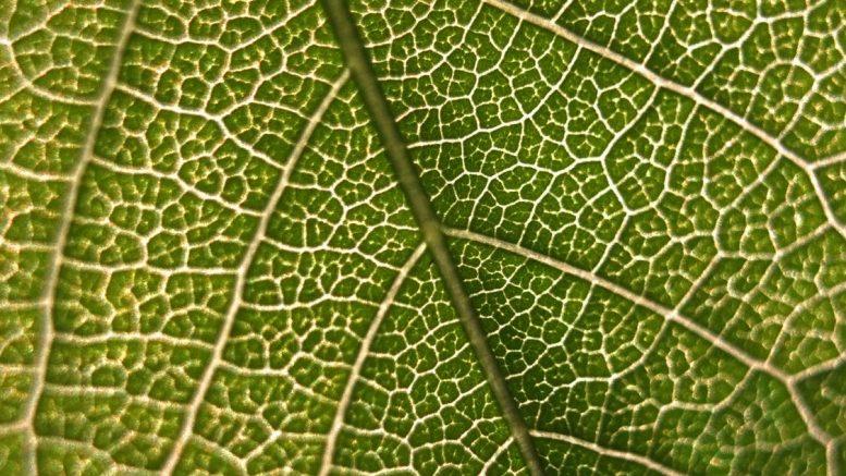 Biocompatible Fabrics