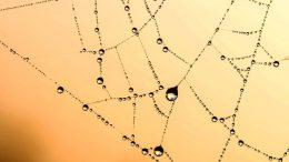 Graphene inspired by Spiders Silk